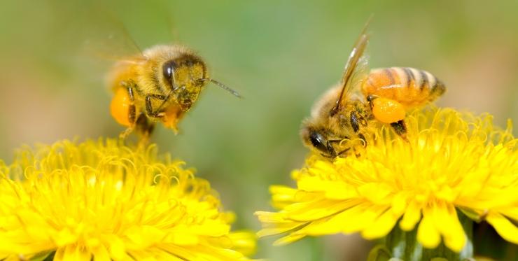 EL-i riigid toetasid kolme mesilasi ohustava pestitsiidi keeldu