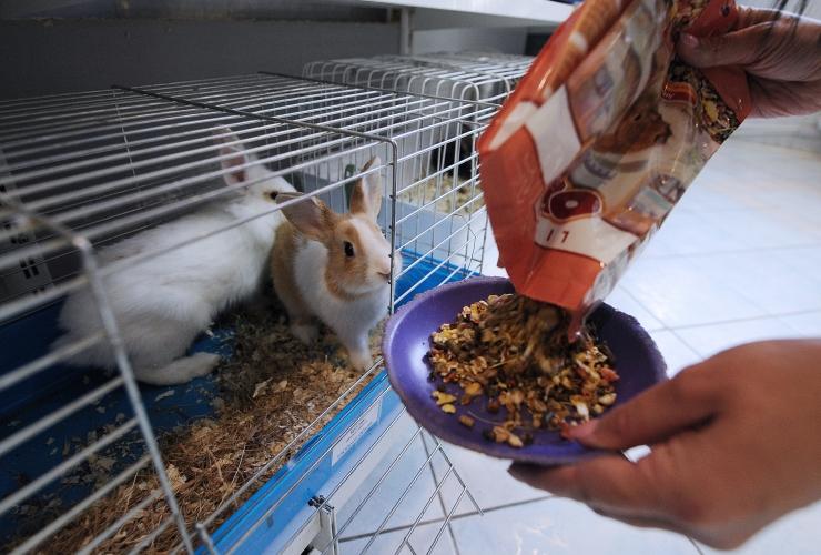 Loomakaitseselts: loomapoodide pidamistingimused on puudulikud