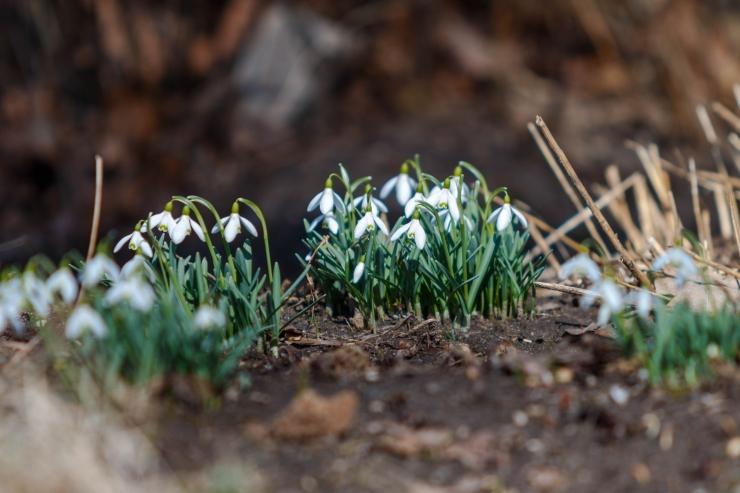 Pühapäev tuleb madalrõhulohu toel kevadiselt soe