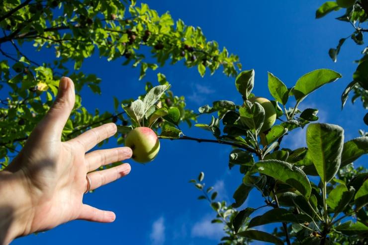 Mahepõllumajandus saab 10 miljonit eurot lisaraha