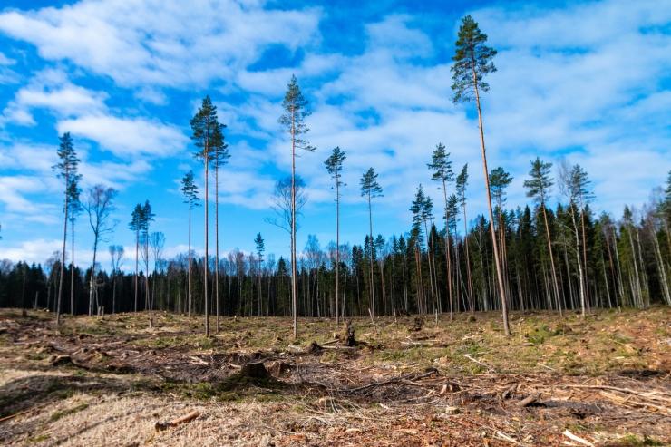 VAATA OTSE! Riigikogus arutletakse Eesti metsade muresid