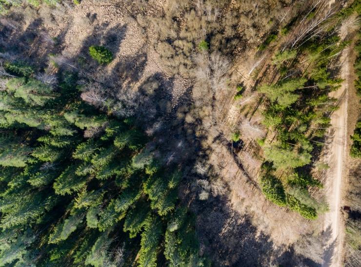 RMK korraldab metsasektorit tutvustava päeva