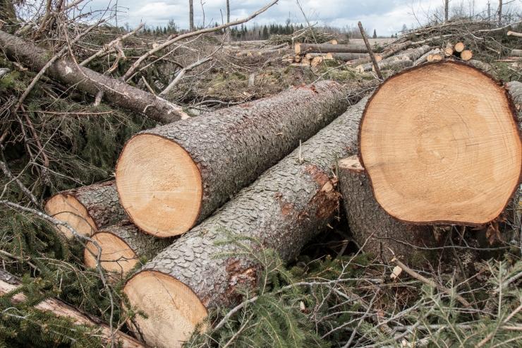 ÖKOLOOG ASKO LÕHMUS: Kompensatsiooni saavad vaid need omanikud, kes lasevad metsa tühjaks raiuda