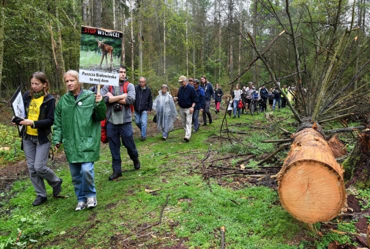 Poola on valmis peatama ulatusliku raie Białowieża ürgmetsas