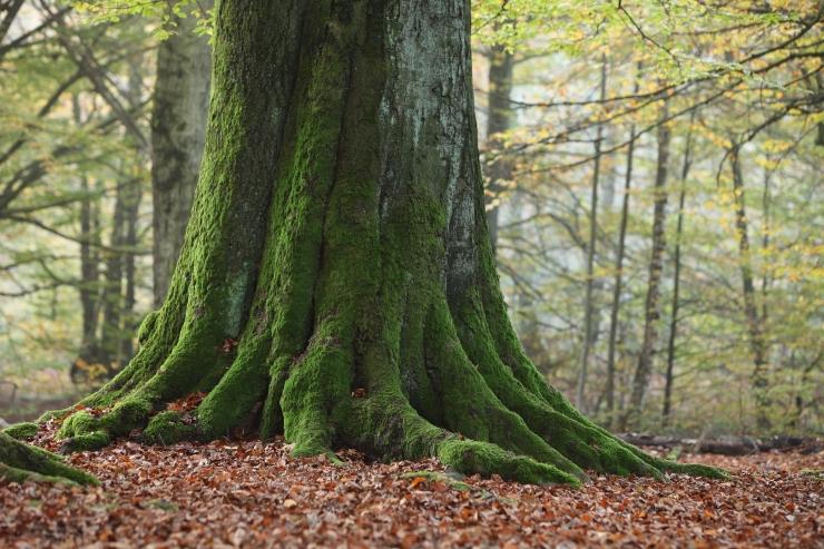 Uus kaardirakendus aitab üles leida Eesti looduslikud pühapaigad