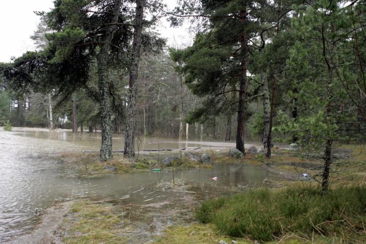 Lohusalu metsade kaitseks asutati loodusselts