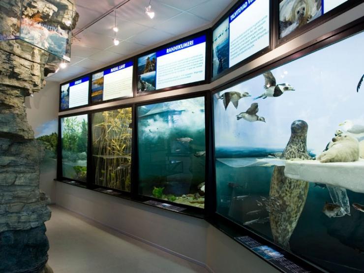 Eesti Loodusmuuseum on suvel avatud iga päev