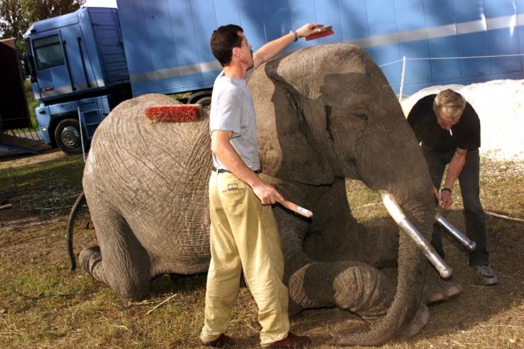Loomus: näitustele lubatud loomade nimekiri on rahuldav kompromiss