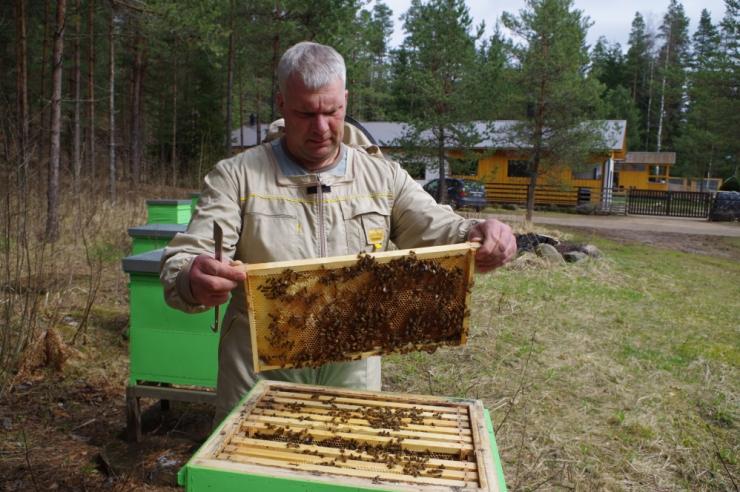 Leht: erakordselt soe kevad tõi mesinikele kümnendi suurima saagi