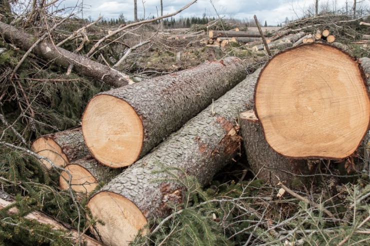 VAATA OTSE: Milline on puidutööstuse tulevik?