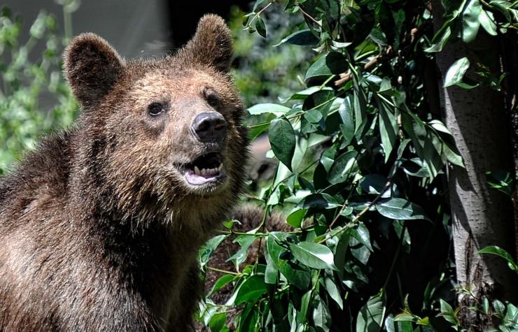 Suur võit loomadele! Reedest keelatakse Eestis metsloomade üritustel kasutamine