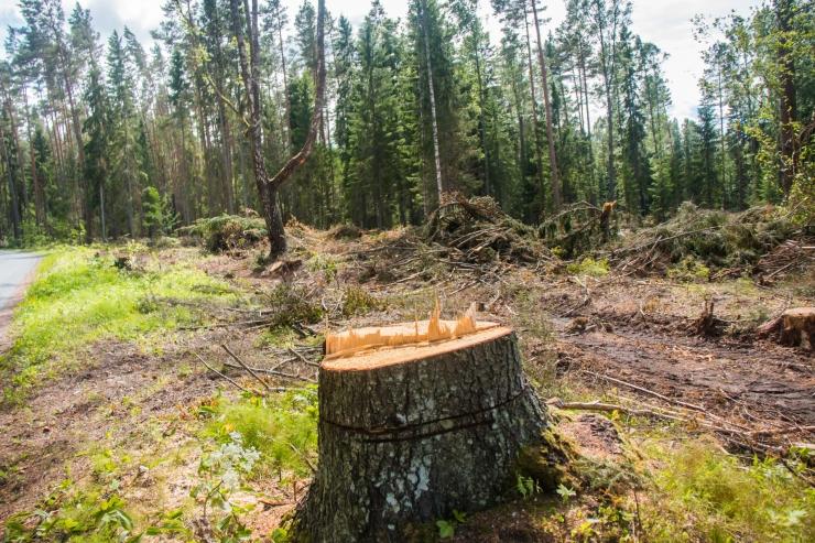 Metsaraie maht kasvas mullu 14,3 miljoni kuupmeetrini
