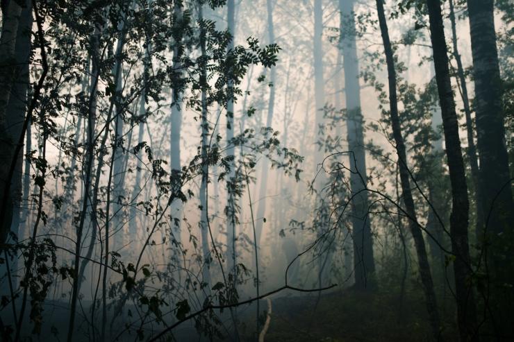 Vikipalu metsapõleng on levinud juba ligi 200 hektarile