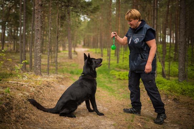 Täna algavad Pärnumaal patrullkoerte kutsemeisterlikkuse võistlused