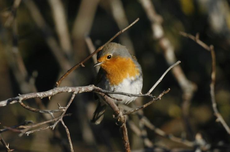 Loodusfestivalil uuritakse kodukoha elurikkust