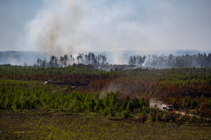 Põlenguala Vikipalus on jätkuvalt ligi 200 hektari suurune