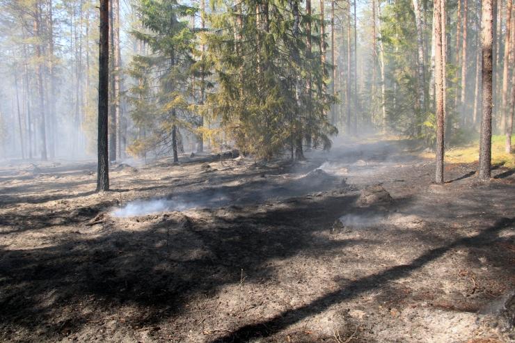 Vikipalu põlengut kustutab 75 inimest