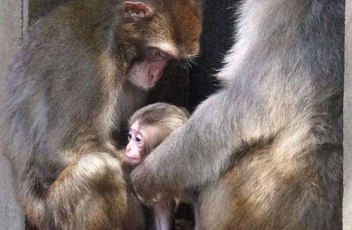 Loomaaias on nädalaga sündinud mitmeid imearmsaid loomabeebisid