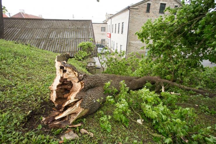 Tugev tuul võib põhjustada kahjustusi