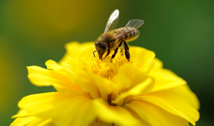 Tuleleegiga mesilaste peletamine lõppes põlenguga
