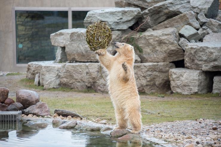 Loomaaed kutsub jäätisepäevale
