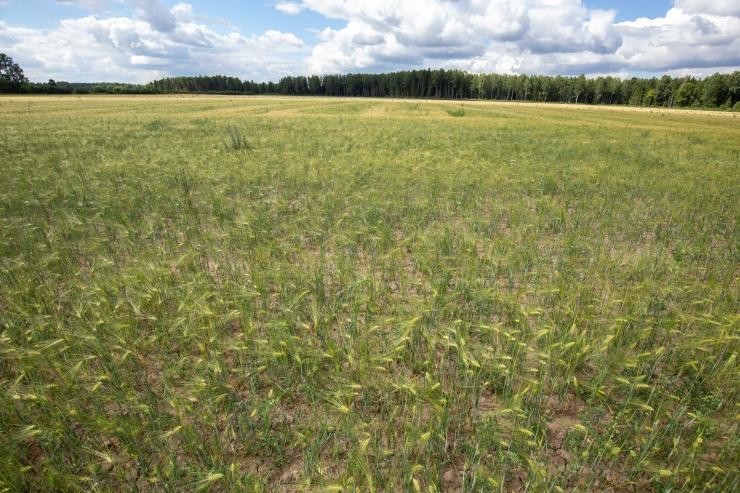 Läti põllumajandusminister küsib Brüsselilt põua tõttu finantsabi