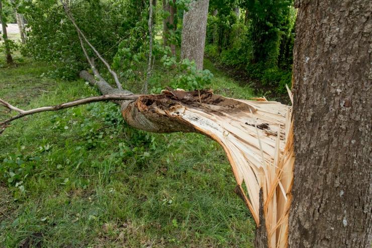 Juunis mõjutasid kahjude arvu torm ja paduvihmad