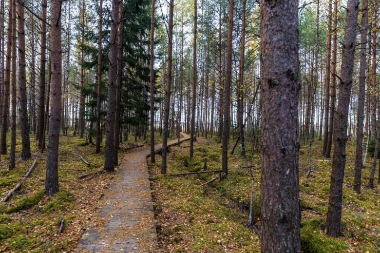 Valitsus plaanib Varbla hoiuala baasil luua looduskaitseala