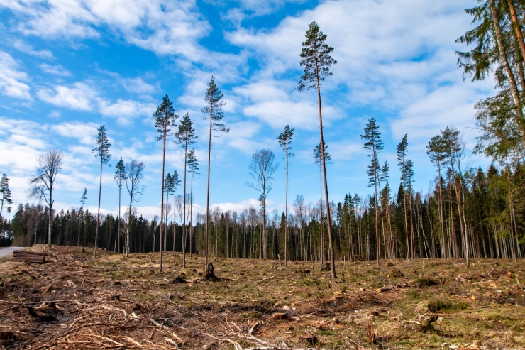 METSAD MAATASA? EMA kahtlustab mastaapset metsapettust Valgamaal