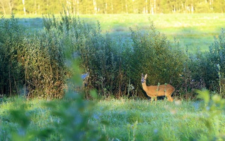 Riik moodustab 11 kaitseala põhjal Alutaguse rahvuspargi