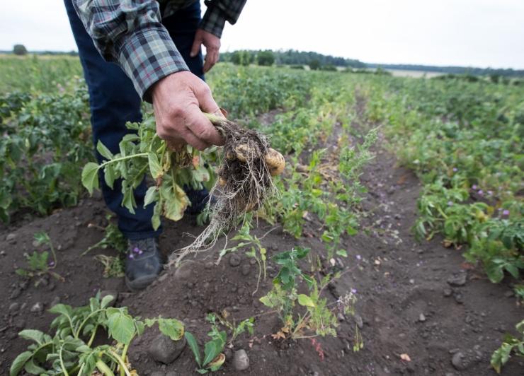 Maaeluministeerium otsib põuakahjude vähendamiseks lisavahendeid