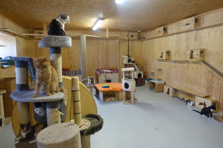 Tallinna loomade varjupaik tähistab teist sünnipäeva suure peoga