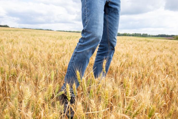 Põllumehed soovivad põuakahjude leevendamiseks 20 miljonit käibelaenu