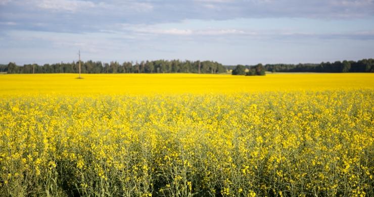 Valitsus eraldab põllumeestele põuakahjude leevendamiseks 20 miljonit eurot