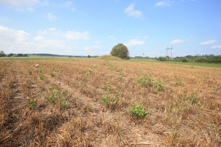 Maaeluminister: astume olulisi samme põllumehe abistamiseks keerulisel ajal