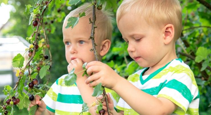 Terviseamet: mürgised marjad ja taimed ohustavad väikelapsi
