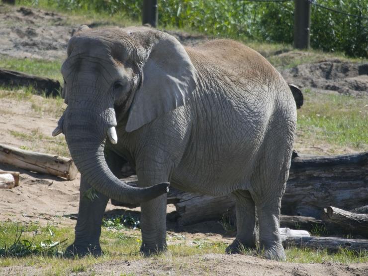 FOTOD JA VIDEO! Tallinna Loomaaed tähistas üleilmset elevantide päeva