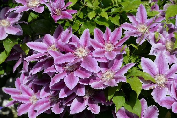 Botaanikaaed ootab elulõngu, flokse ja viinamarju imetlema