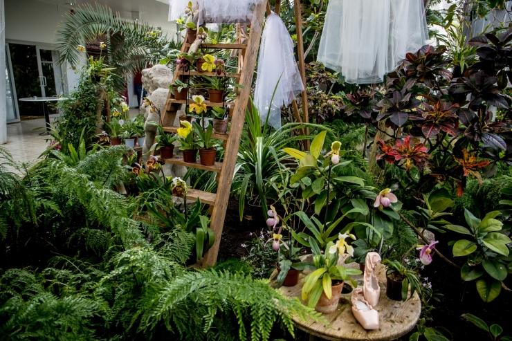 Tallinna Botaanikaaed kutsub kõiki taasiseseisvumispäeval külla.