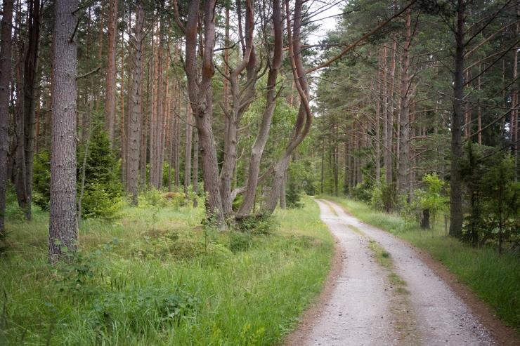 EV100 suvine peonädal toob esimese Eesti looduse päeva