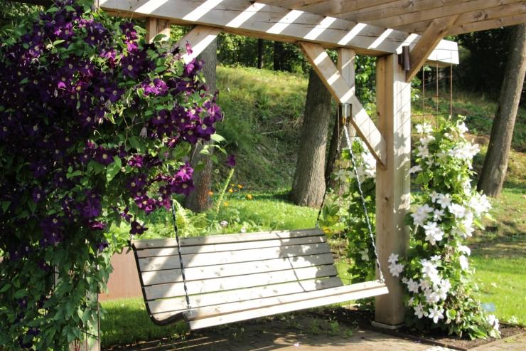 Tallinna Botaanikaaed kutsub elulõngade, flokside ja viinamarjade näitusele