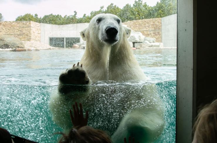 FOTOD! Loomaaed tähistas 79. sünnipäeva!