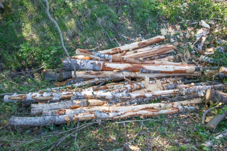 Kolmeteistkümne riigi organisatsioonid protestivad Ida-Viru jaamades puidu põletamise vastu