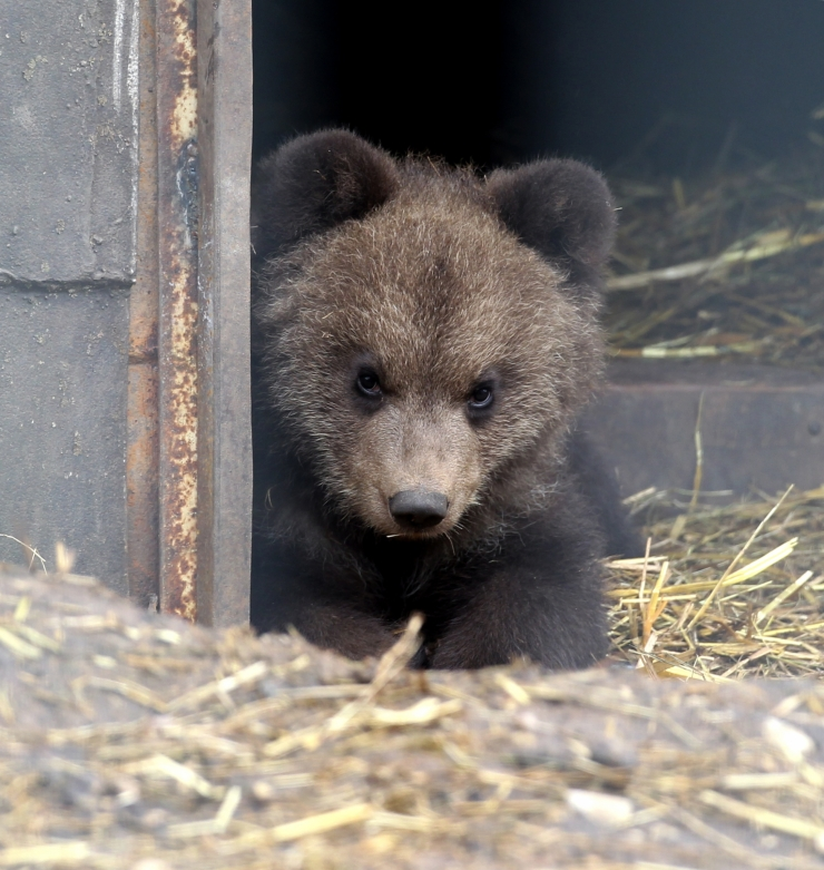 Jahimehed on lasknud sel hooajal Eestis 45 karu