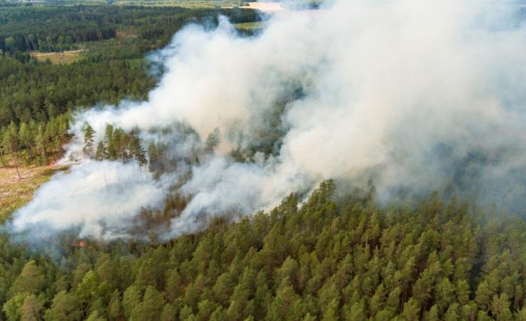 Suvel oli metsa- ja maastikupõlenguid keskmisest rohkem