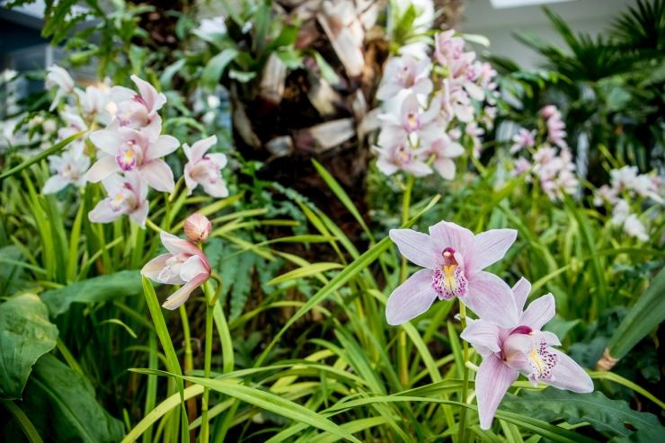 Tallinna Botaanikaaed tervitab saabuvat sügist ja kutsub rännakule eestiaegse aiakultuuri radadele