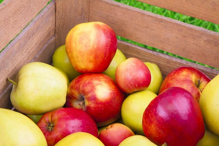 Tule laupäeval õunafestivalile!