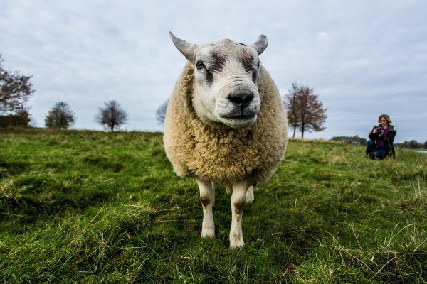 Kaunid loomafotod pääsevad kalendrisse