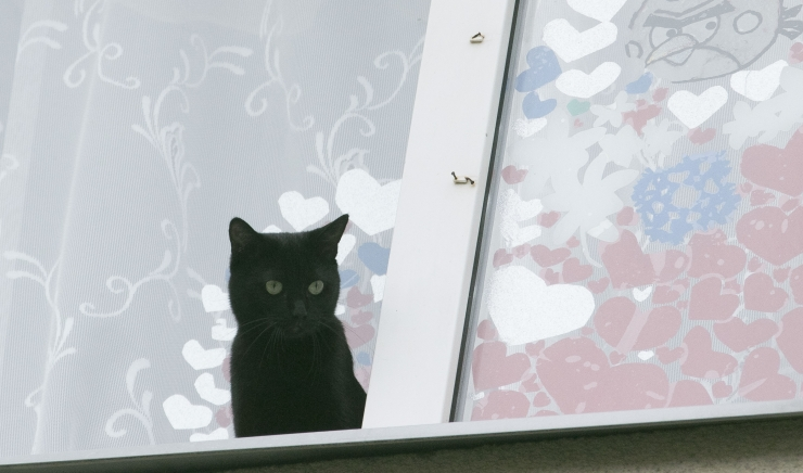 Oktoobris saab varjupaigast musta kassi võtta loovutustasuta