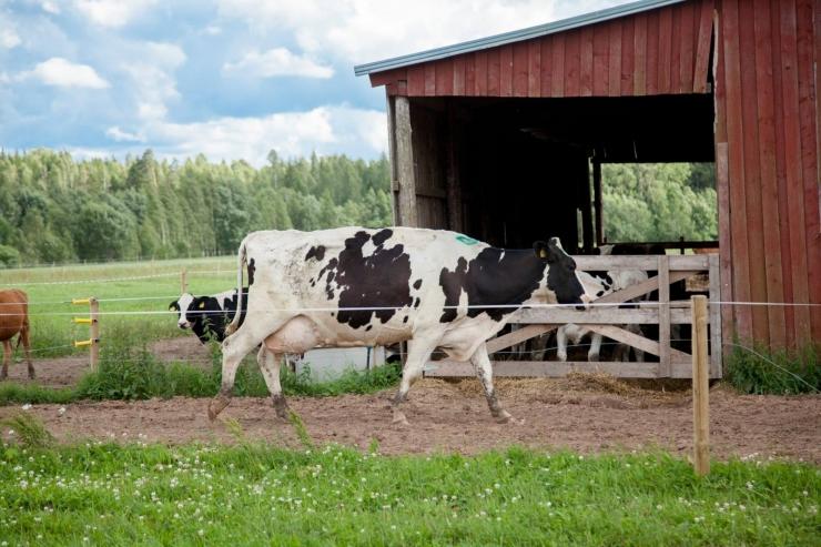 Eestis on tänavu kõige Läänemere sõbralikum talu Pajumäe talu